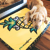 Starsky Loves the Staypineapple Dog Bed!